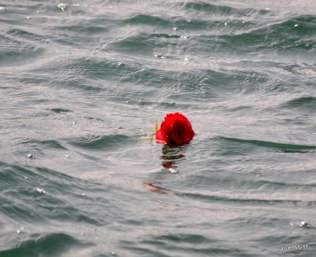 rosa-en-la-mar-d130b1b7-af12-4f90-8c22-cebe7a108121